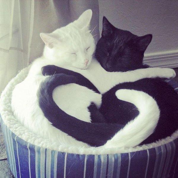 Yin and yang. .. here's another less than awe-inspiring yin yang