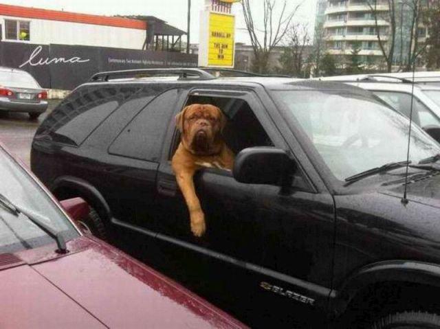 Yo Dawg. sup?.