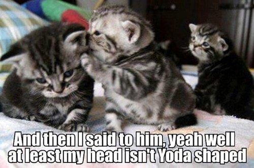 Yoda Cat. . cat Cats Yoda