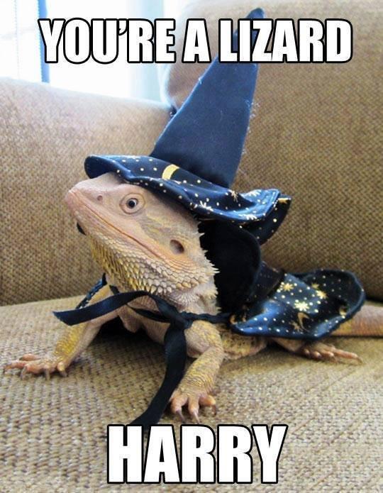 You're a lizard. .