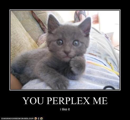 You perplex me . . .. LOLKATZ = WINNING!. YOU PERPLEX ME ilike rt lolkatz rule