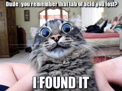 Acid Cat. .