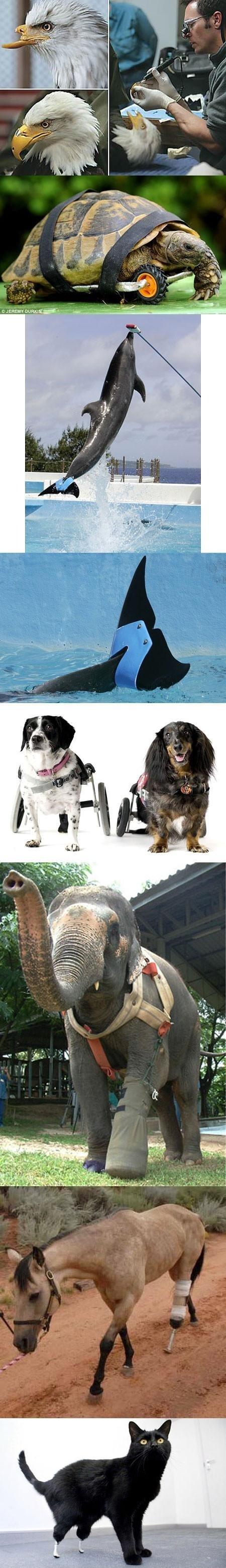 Animal prosthesis. not oc just awesomeness.