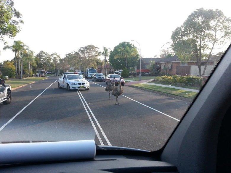 Australian Hot Pursuit. Amazing police chase caught on camera.
