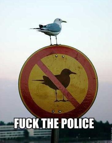 "badass bird. lol found it. fait"" Aili' it m run"