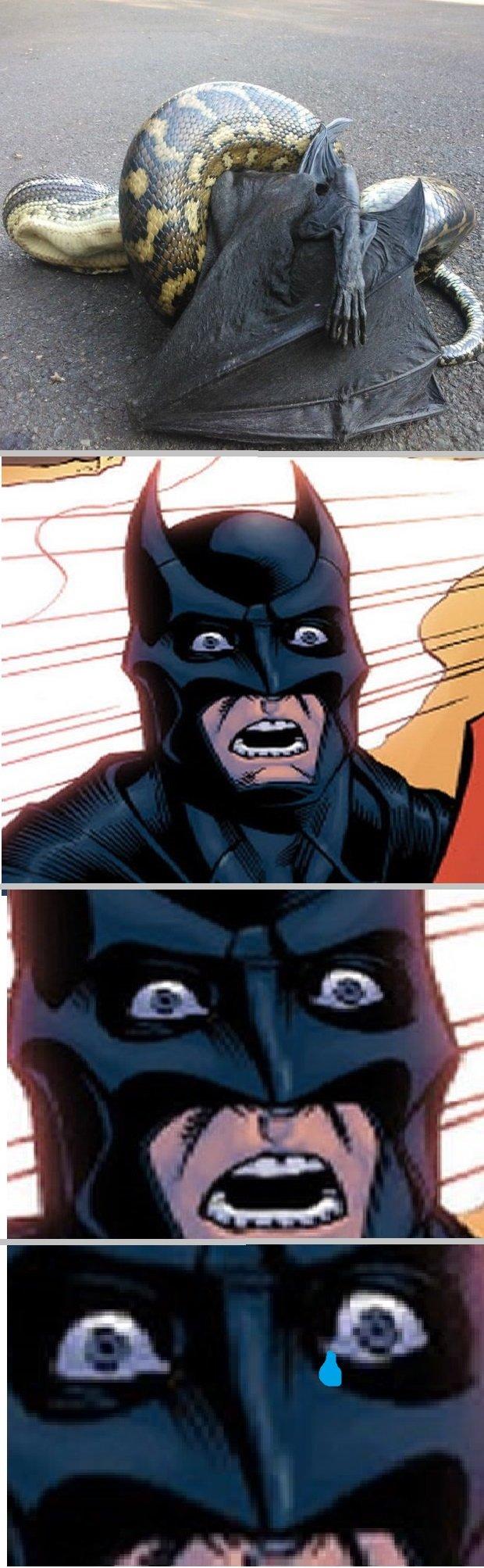 Bat.....I. Poor bastard....