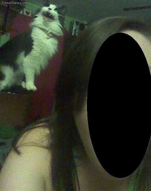 best cat picture ever. meow. Treas': itu. re. cam