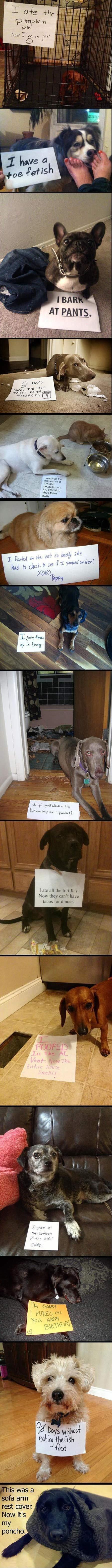 best of dog shaming. . ff; PASTE Mit may MM hau- lawns for dinner. brg 'um taist'. I giggled.