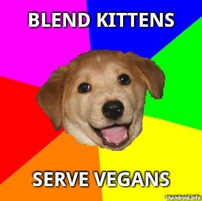 blend kittens. . BLEND KITTENS