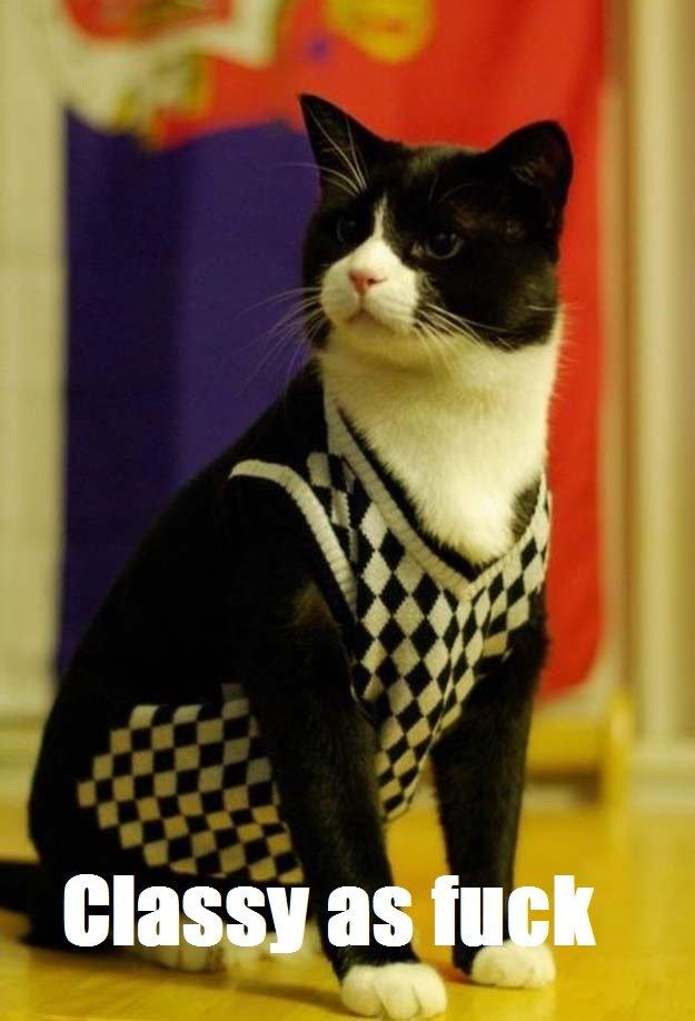 Cat. Kitty cat.