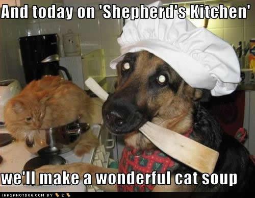 cat soup. .