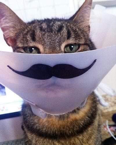 """Cat-stash!. well, how fancy.. """"Quick, hide the stash"""" huehuehuehuehue"""