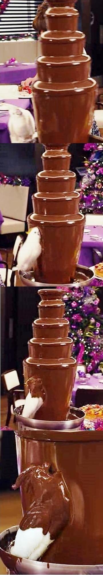 CHOCOLATE BIRD!!!. .
