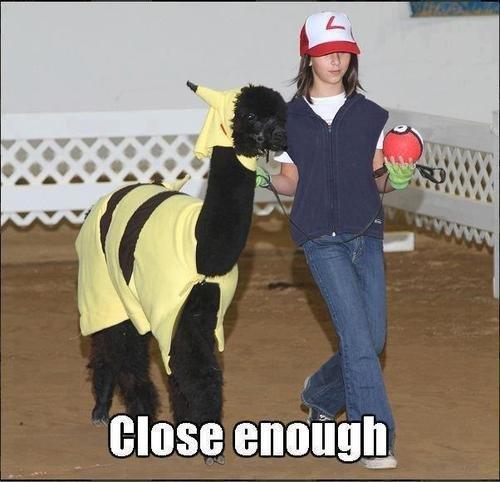 close enough. llamas.