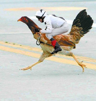 Cock Jockey 31