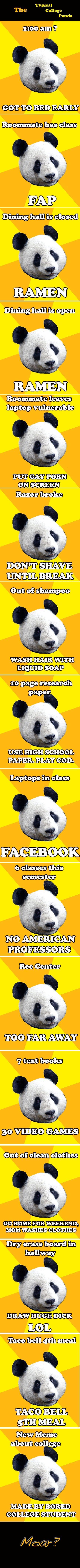 COLLEGE PANDA. partially my freshman college life.. Typical College Panda RAMMEN 1, BREAK Quasi? DEE SCHOOL e. college MADE If BORED E STUDENT. THE FOOD OF GODS