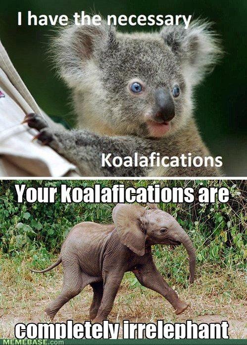 Comeback to Koalifications. Animal Humor FTW. Cgr i 8 (iif. oh wow