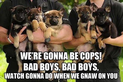 Cops in training. . wen; conga; calm; L. an mus. any BOYS, t wanna mun nu; fhonax),, mm on mu. Ok.