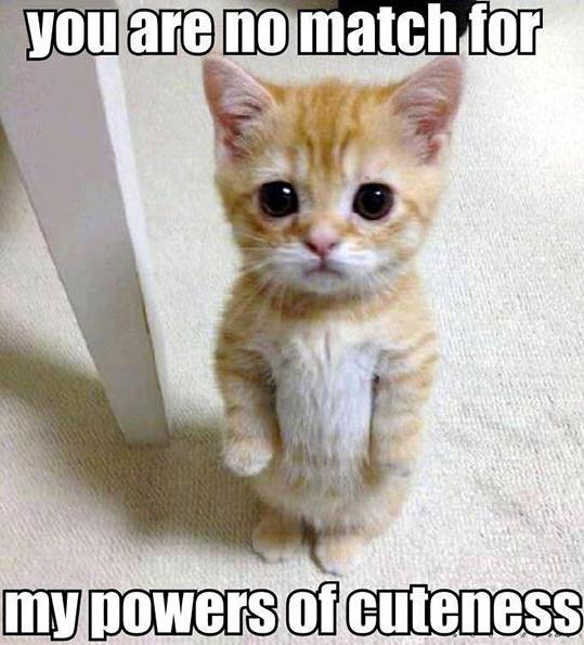 Cute kitty!. Cute kitty!.. THAT IS FREKIING CUUUUUUUUUUTE <
