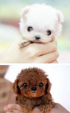 cute. Q.