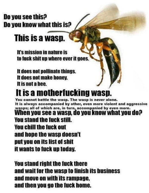 Dem Wasp. .