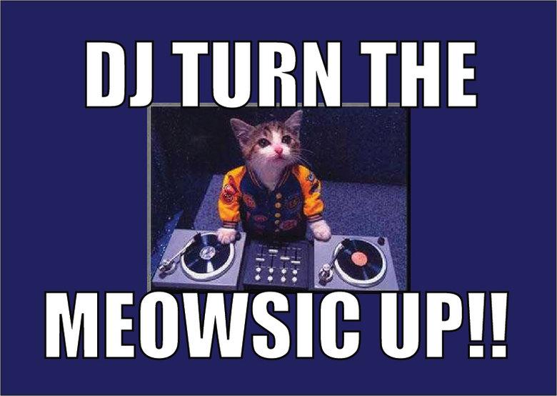 DJ Turn The Meowsic Up!!. . lilo m,