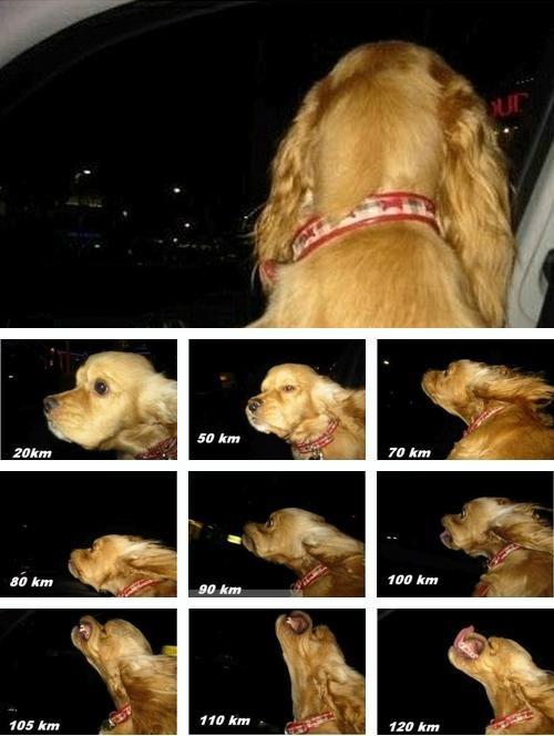 Dog Car. .. km/h