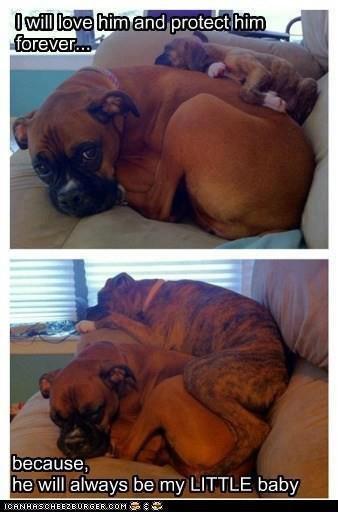 Dog Feels. Dawwwww.