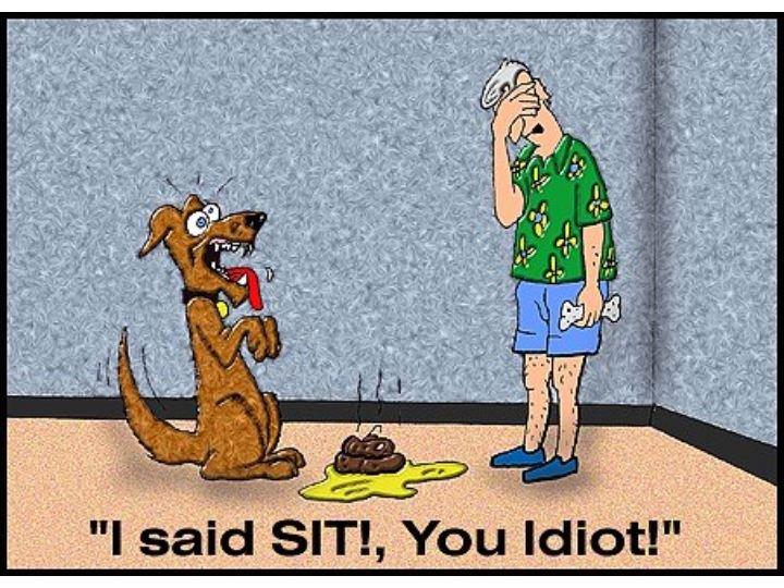 "dog. . I said sari, You ediot!"""