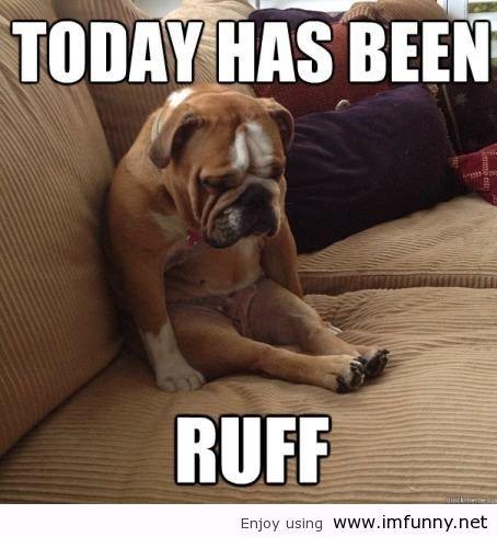 dogs ruff day. . Enjoy using ill!