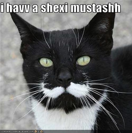 epic fail cat. .