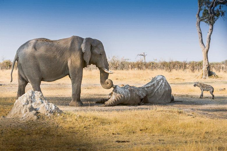 Farewell, my trunky friend. An elephant's farewell.