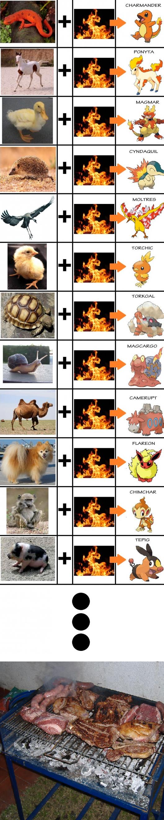 Fire pokemon. i better stay with chikorita.. OMG Pokemon are based on animals!