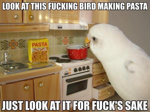 "fucking bird. . HIST HT tr titta KI"". Not sure if giant bird, or tiny kitchen."