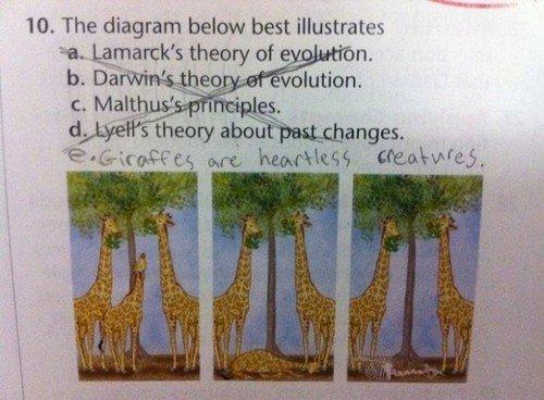 fucking giraffes. . The diagram below best illustrative