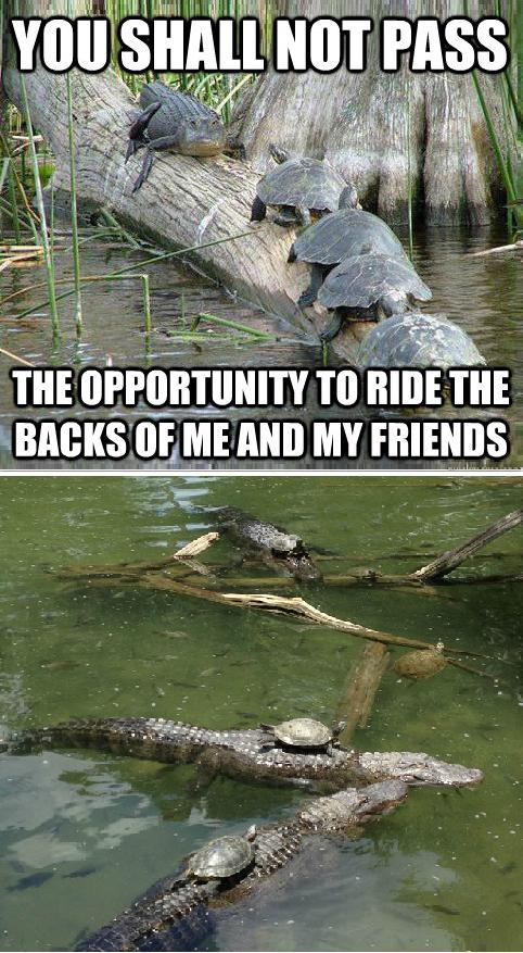 Gandalf Alligator. .