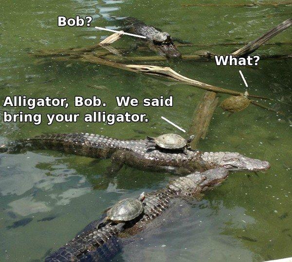 God Damn it Bob. not OC (please don't kill me if it's a repost).