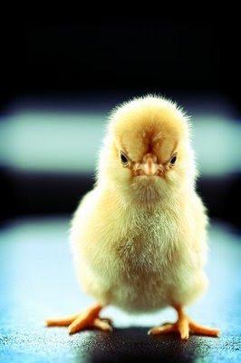 grumpy chick. .. Looks like scp 173