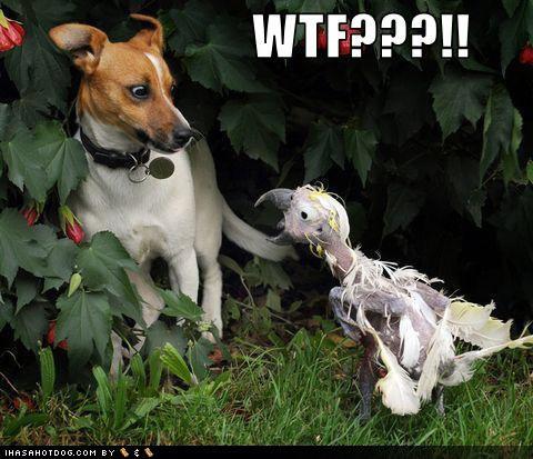 hahahaha. .