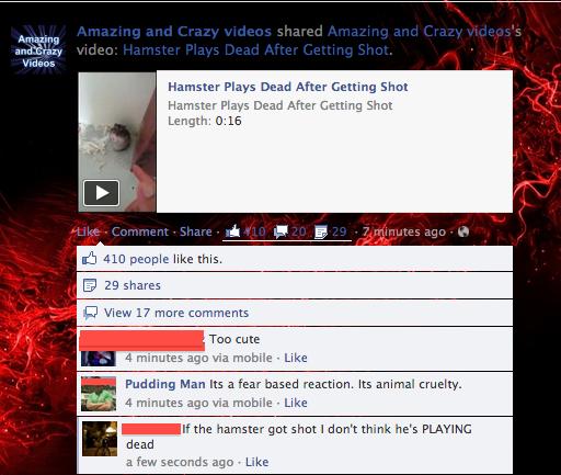 hamster shooting. .