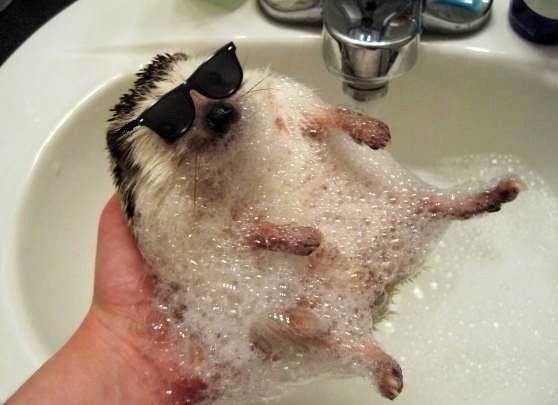 Hedgehog. .