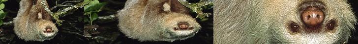 HI. IYA.. there's a sloth channel