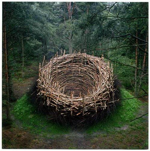 how a nest looks to a bird. .