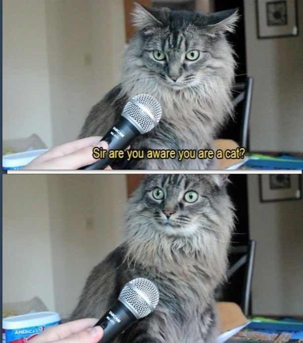 """I... what?. .. """"You're a cat!"""" Wait... I... am cat ?"""