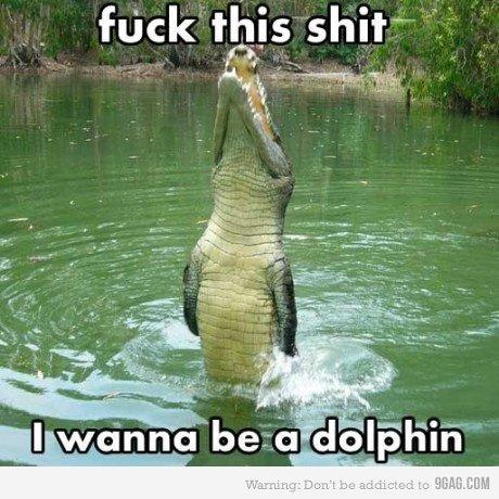 I wanna be a dolphin. Good choice 'gator, good choice..