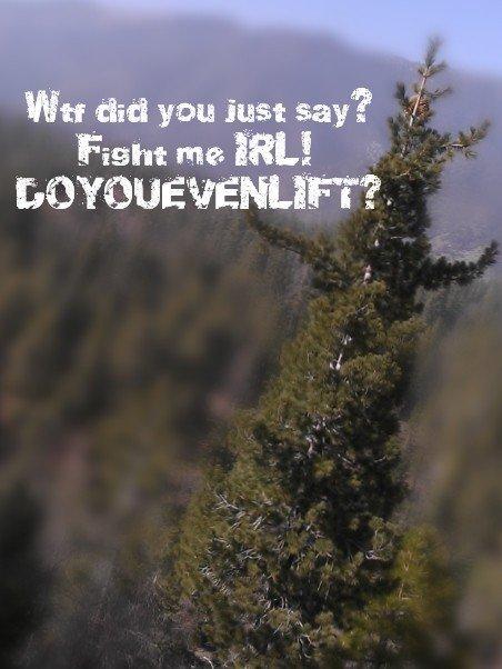 Internet Tough Guy Tree. Do it even lift?.