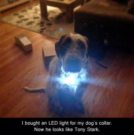 Iron Dawg.. . 1 bought an LED light for my dog' s collar., Now he looks like Tony Stark.,. More like tony bark haha amirite?
