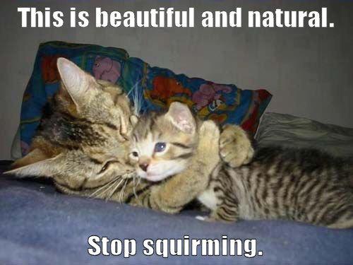 kitty rape. stop squirming haha.