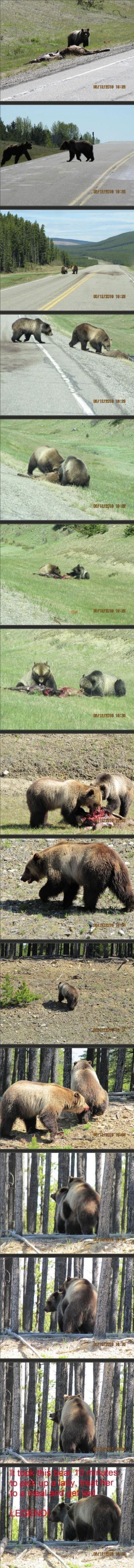 legendary bear. . was alumni than