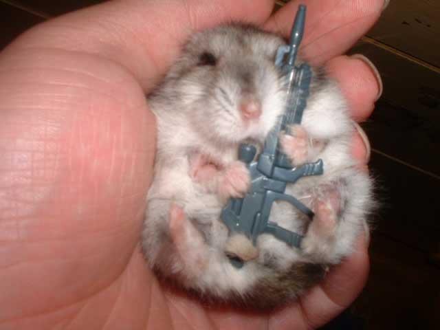little bitty pwnage hamster. he will pwn.. GOD DAMMIT THAT'S CUTE.